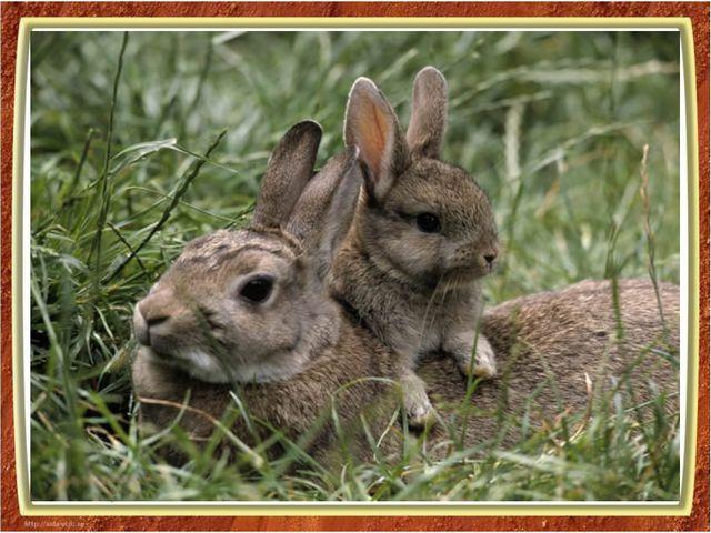 капля воды - тело Новорожденные зайчата похожи на пушистые комочки и весят ок...