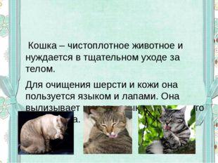 Кошка – чистоплотное животное и нуждается в тщательном уходе за телом. Для о