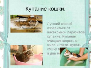 Купание кошки. Лучший способ избавиться от насекомых- паразитов- купание. Куп