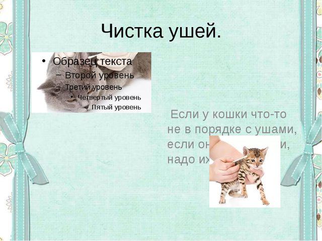 Чистка ушей. Если у кошки что-то не в порядке с ушами, если она трясёт ими, н...