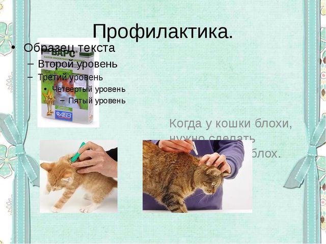 Профилактика. Когда у кошки блохи, нужно сделать процедуру от блох.