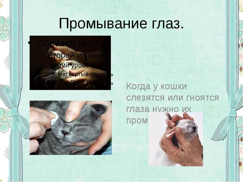 Промывание глаз. Когда у кошки слезятся или гноятся глаза нужно их промыть.