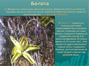 Болота Множество небольших сфагновых болот можно встретить в области буковых