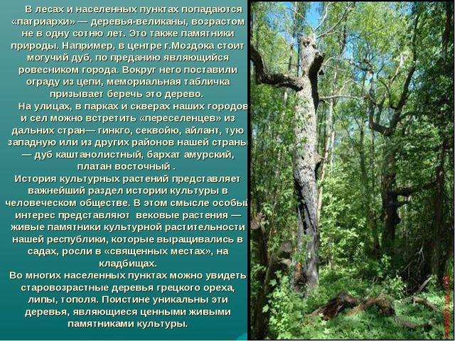 В лесах и населенных пунктах попадаются «патриархи» — деревья-великаны, возр...