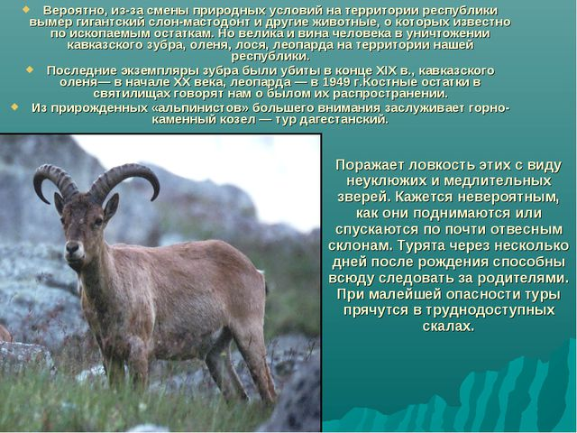 Вероятно, из-за смены природных условий на территории республики вымер гигант...