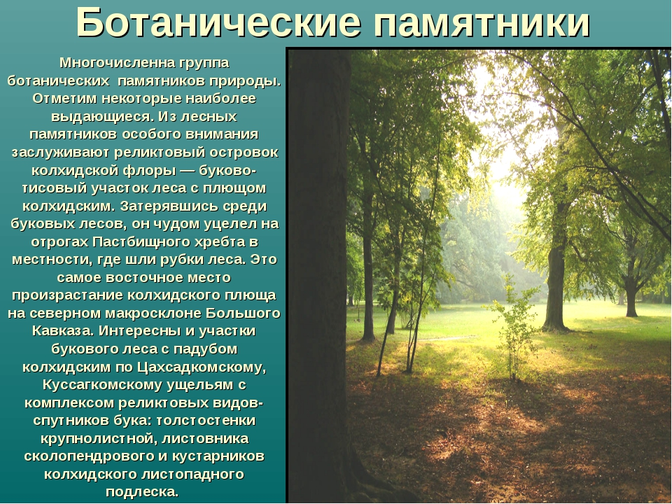 Многочисленна группа ботанических памятников природы. Отметим некоторые наибо...