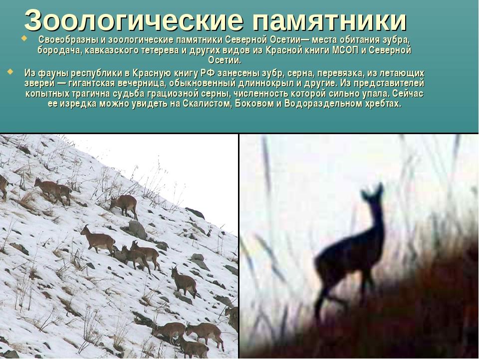 Зоологические памятники Своеобразны и зоологические памятники Северной Осетии...