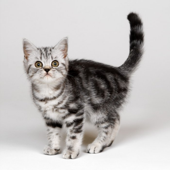 basik.ru - Животный мир - Котята - фотография 2