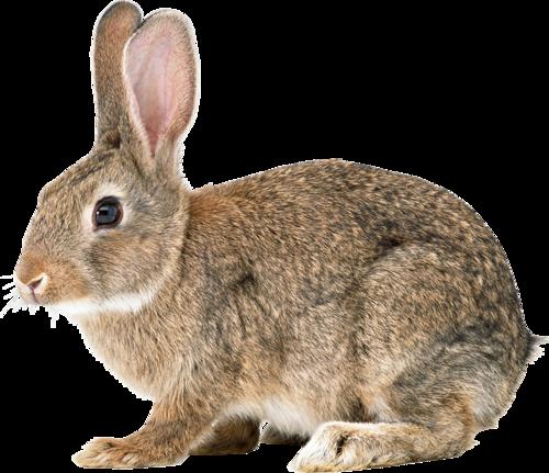 Кролики - Форум Photoshop и Web дизайна