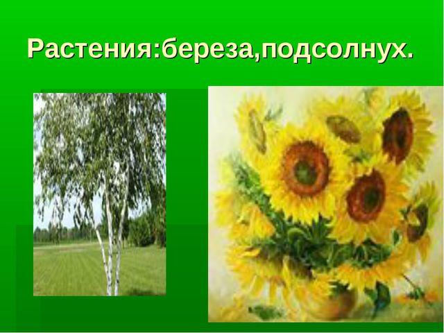 Растения:береза,подсолнух.