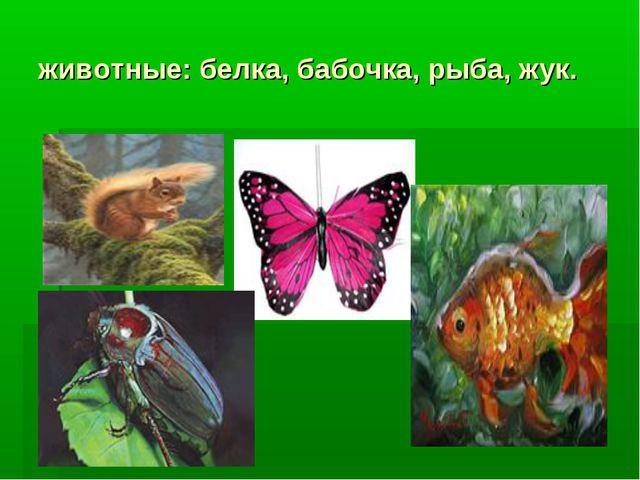 животные: белка, бабочка, рыба, жук.