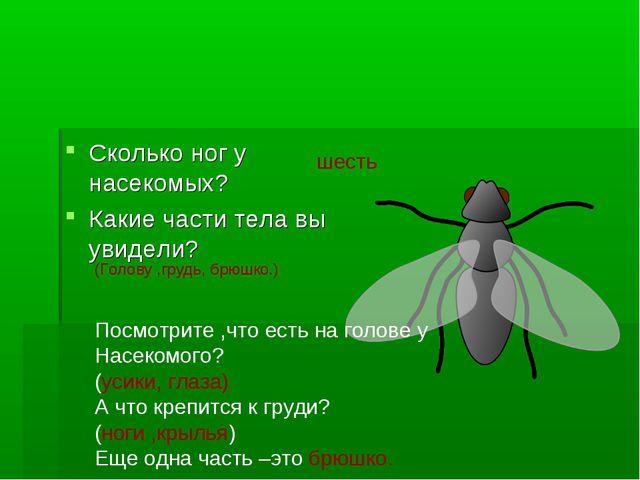 Сколько ног у насекомых? Какие части тела вы увидели? шесть (Голову ,грудь, б...
