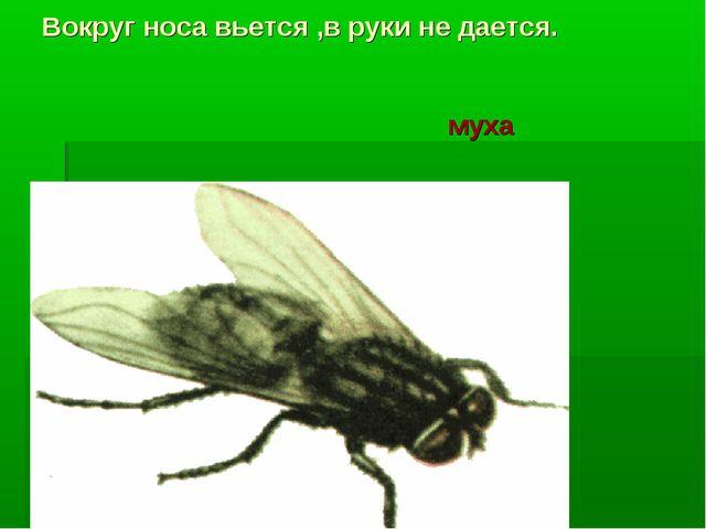 Вокруг носа вьется ,в руки не дается. муха муха