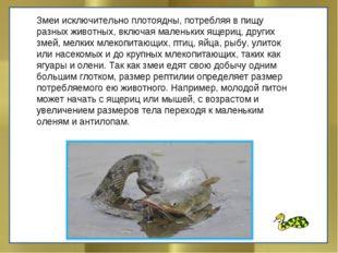 Змеи исключительно плотоядны, потребляя в пищу разных животных, включая мален