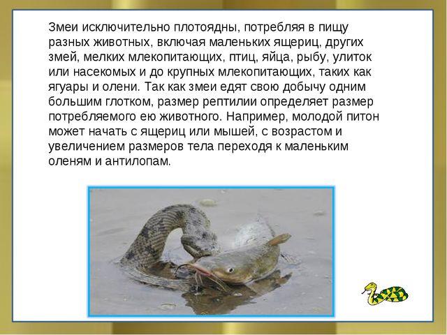 Змеи исключительно плотоядны, потребляя в пищу разных животных, включая мален...