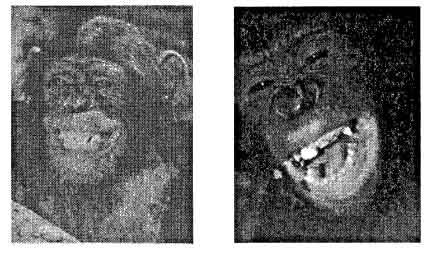 улыбка приматов