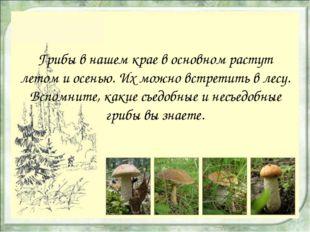 Грибы в нашем крае в основном растут летом и осенью. Их можно встретить в лес