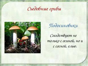 Съедобные грибы Подосиновики Соседствуют не только с осиной, но и с сосной, е