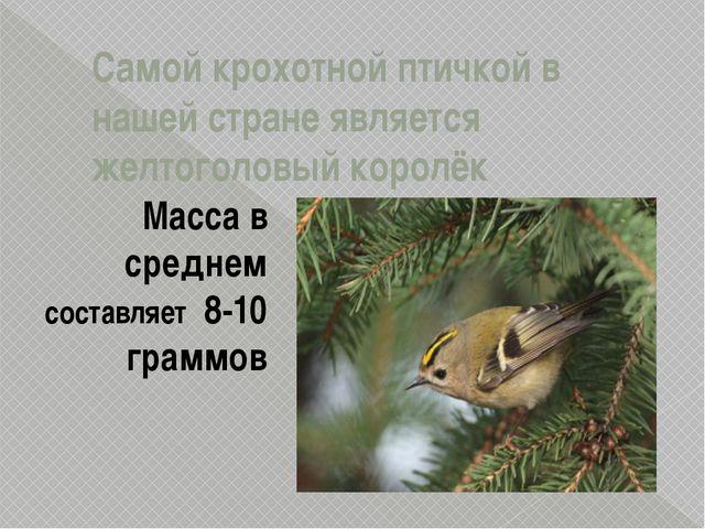 Самой крохотной птичкой в нашей стране является желтоголовый королёк Масса в...