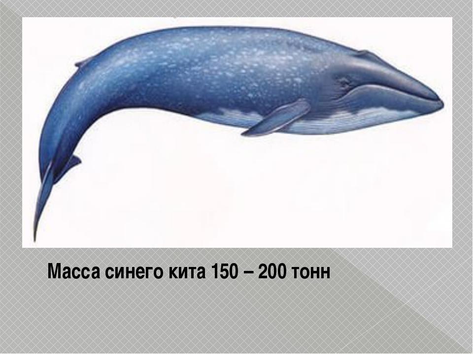 Масса синего кита 150 – 200 тонн