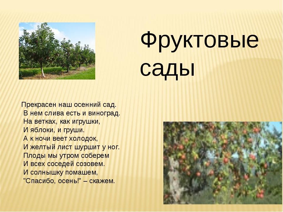 Фруктовые сады Прекрасен наш осенний сад. В нем слива есть и виноград. На вет...