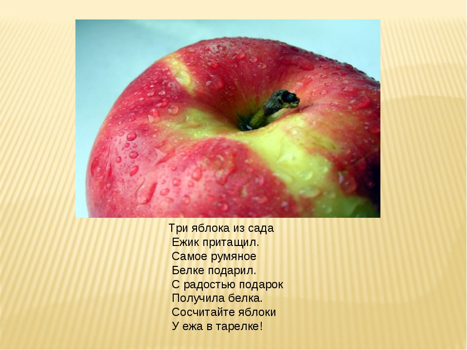 Три яблока из сада Ежик притащил. Самое румяное Белке подарил. С радостью под...