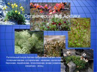 Растительный покров Арктики представлен злаками, осокой, полярными маками, ку