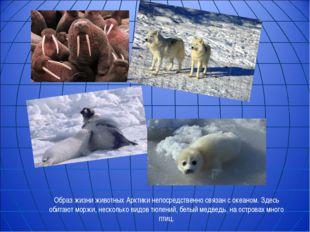 Образ жизни животных Арктики непосредственно связан с океаном. Здесь обитают