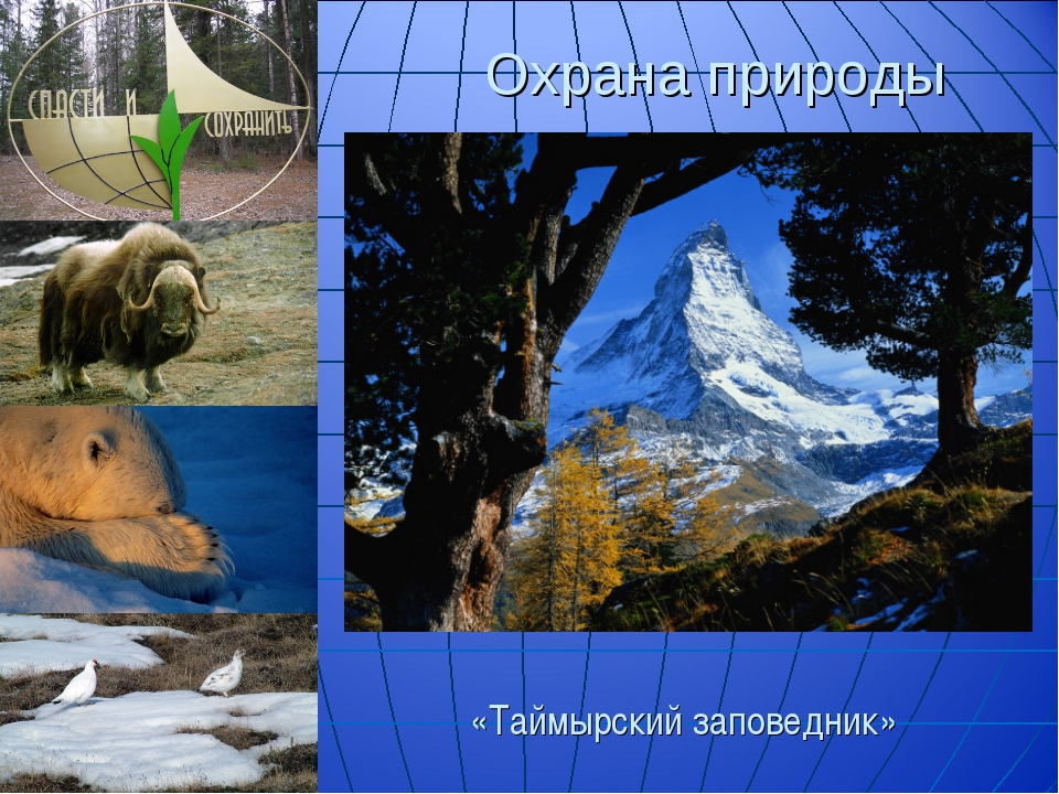 Охрана природы «Таймырский заповедник»
