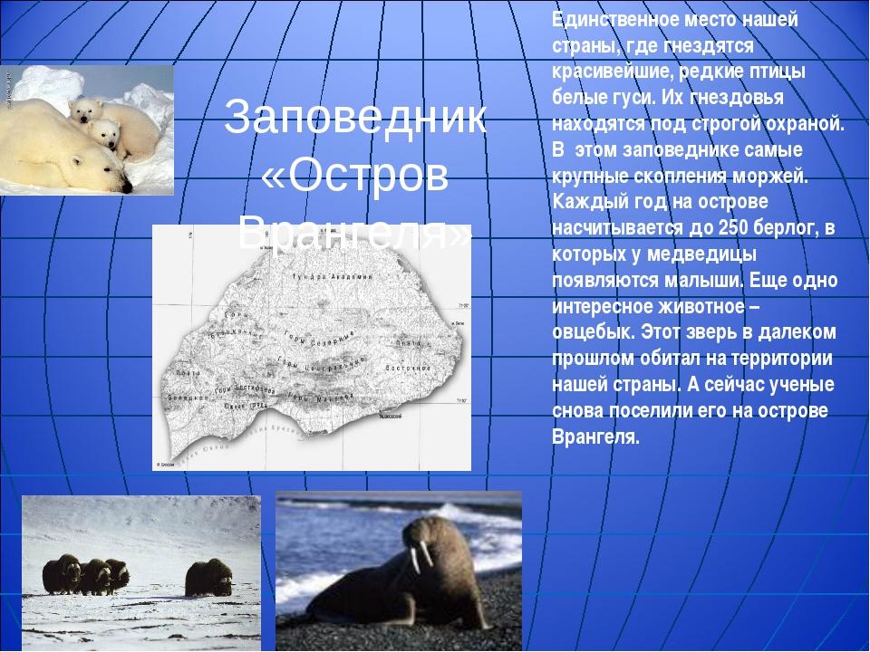 Заповедник «Остров Врангеля» Единственное место нашей страны, где гнездятся к...