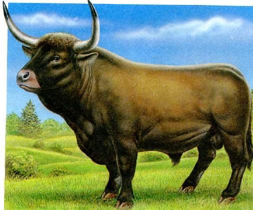 http://dinozavrikus.ru/wp-content/uploads/2012/01/%D0%94%D0%BB%D0%B8%D0%BD%D0%BD%D0%BE%D1%80%D0%BE%D0%B3%D0%B8%D0%B9-%D0%B1%D1%8B%D0%BA.jpg