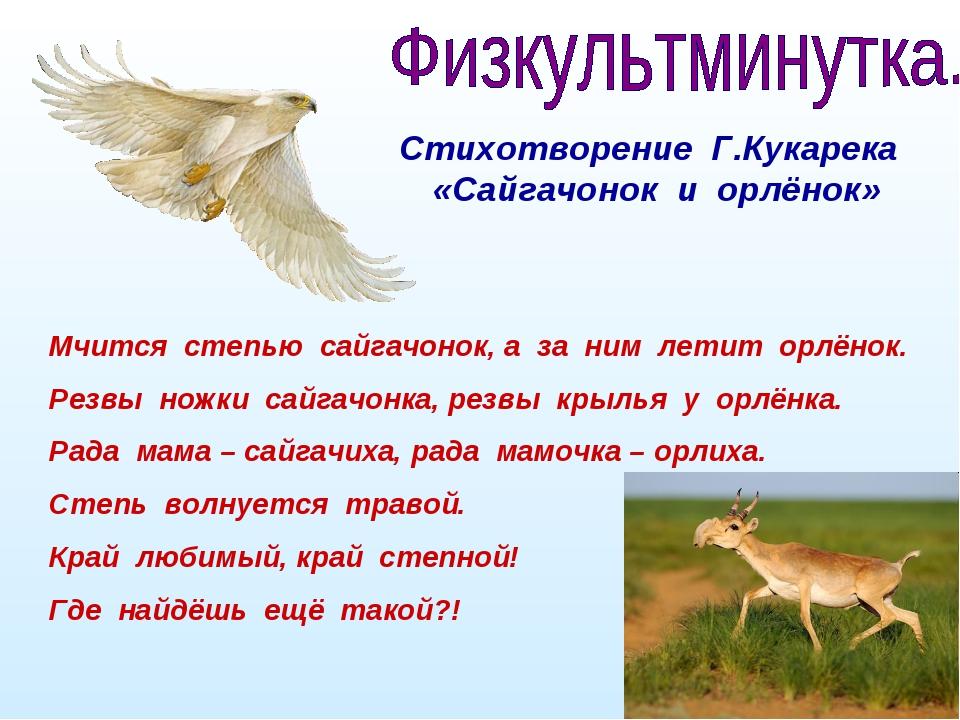 Стихотворение Г.Кукарека «Сайгачонок и орлёнок» Мчится степью сайгачонок, а...