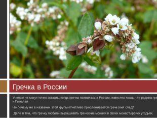 Гречка в России Ученые не могут точно сказать, когда гречка появилась в Росси