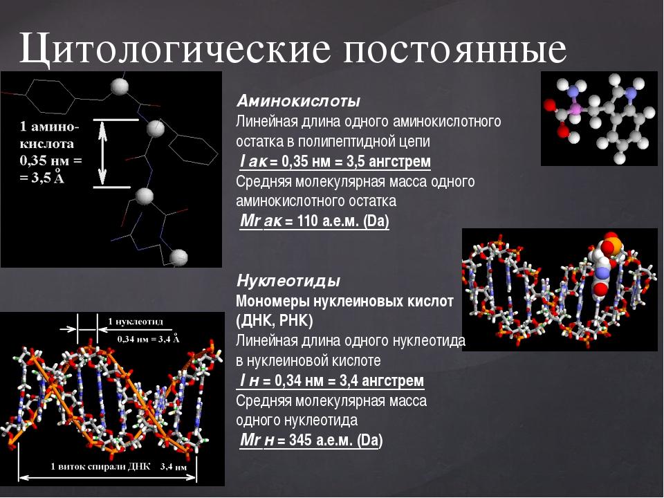 Цитологические постоянные Аминокислоты Линейная длина одного аминокислотного...