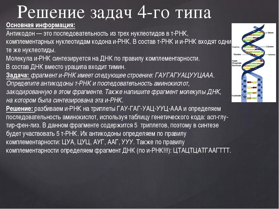 Решение задач 4-го типа Основная информация: Антикодон— это последовательно...