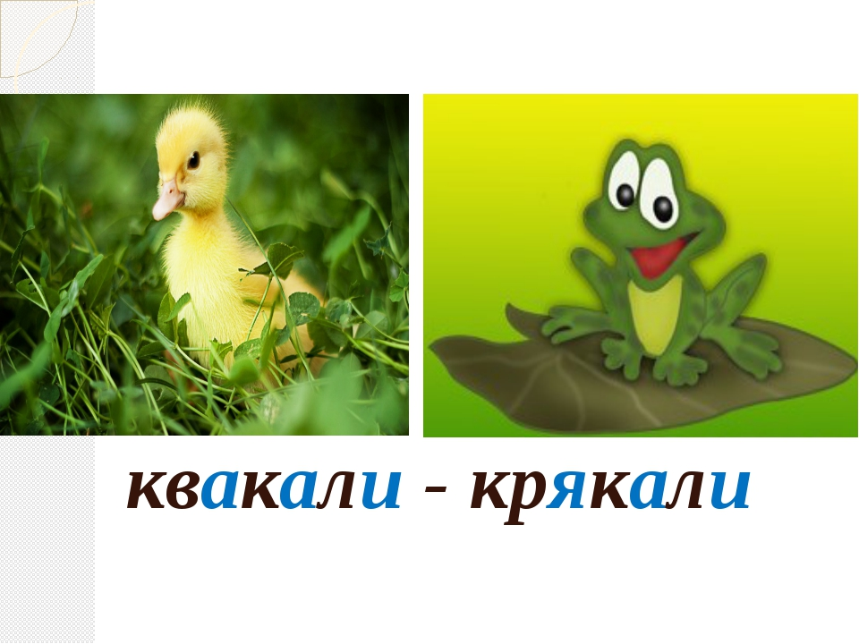 квакали - крякали