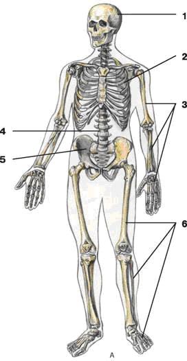 http://www.vitaminov.net/pics/1304028792.gif