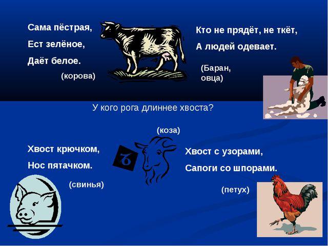 Сама пёстрая, Ест зелёное, Даёт белое. (корова) Кто не прядёт, не ткёт, А люд...
