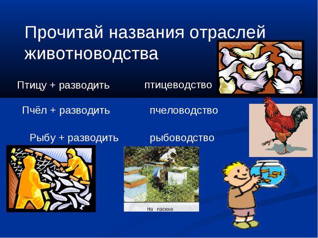 Прочитай названия отраслей животноводства Птицу + разводить Пчёл + разводить...