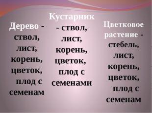 Дерево - ствол, лист, корень, цветок, плод с семенам Кустарник - ствол, лист,
