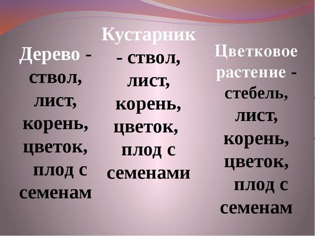 Дерево - ствол, лист, корень, цветок, плод с семенам Кустарник - ствол, лист,...