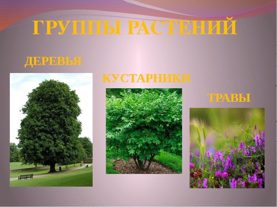 столько картинки групп растений деревья кустарники и травы его прозвали, прозвал