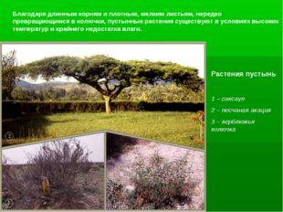 Благодаря длинным корням и плотным, мелким листьям, нередко превращающимся в