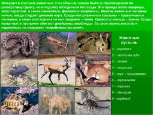 Животные пустынь 1 - черепаха 2 – песчаная эфа 3 – агама 4 – скорпион 5 – жук