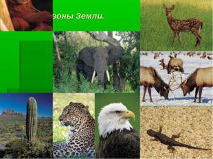 Природные зоны Земли.