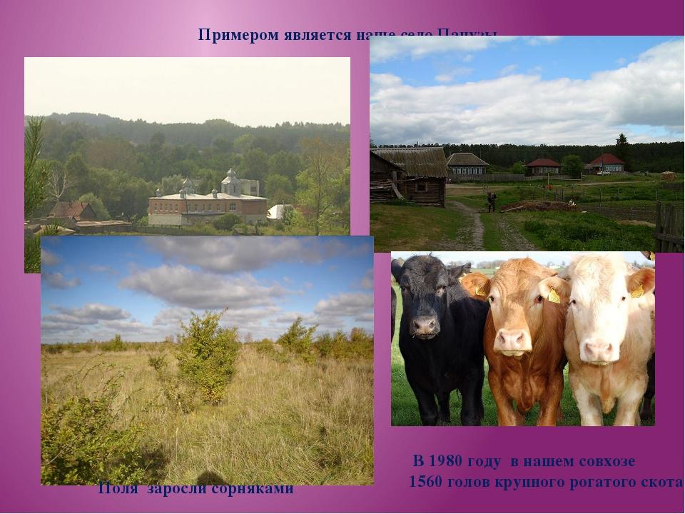 Примером является наше село Папузы Поля заросли сорняками В 1980 году в нашем...