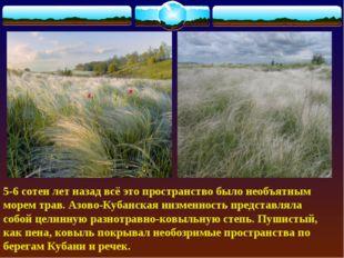 5-6 сотен лет назад всё это пространство было необъятным морем трав. Азово-К