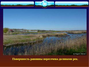 Поверхность равнины пересечена долинами рек.
