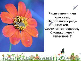 Распустился наш красавец На полянке, средь цветков. Сосчитайте поскорее, Скол