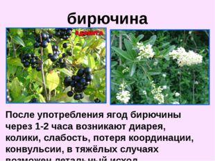 После употребления ягод бирючины через 1-2 часа возникают диарея, колики, сла